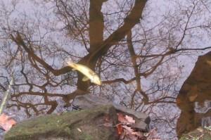 Bradshaw Brook Pollution