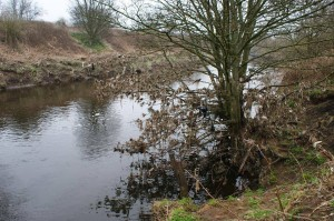 Irwell Sewage Tree