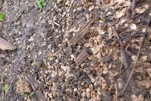 Irwell Sewage Pollution Jan 13 014