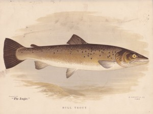 Bull Trout - The Angler Magazine 1948