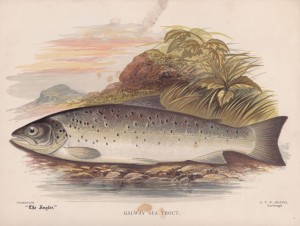 Galway Sea Trout - The Angler Magazine 1948