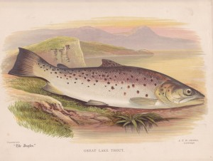 Great Lake Trout - The Angler Magazine 1948