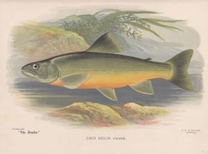 Loch Killen Charr - The Angler Magazine 1948