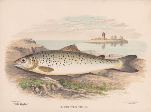 Loch Leven Trout - The Angler Magazine 1948