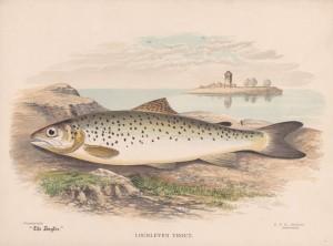Loch Leven Trout - The Angler Magazine 1948
