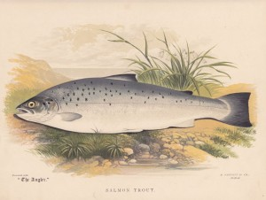 Salmon Trout - The Angler Magazine 1948