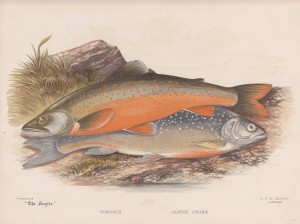 Torgoch and Alpine Charr - The Angler Magazine 1948
